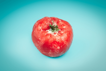 Freezing cherry tomatoes at room temperature or in warm water isn't good