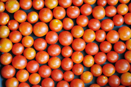 Freezing cherry tomatoes on a baking sheet in the freezer